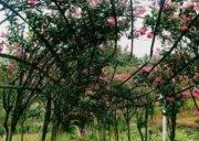 花千谷秘密花园